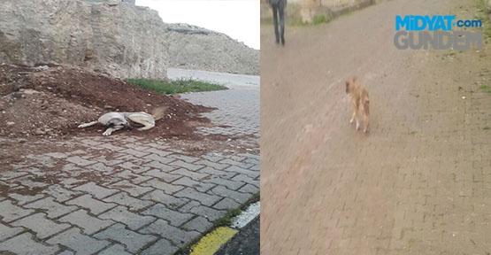 Başıboş köpekler vatandaşları tedirgin ediyor