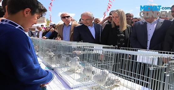 """""""Mardin Güvercin Festivali"""""""