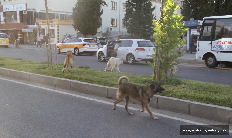 Midyat Belediyesinden sokak hayvanlarına yönelik çalışma