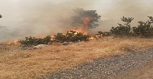 Bagog dağında orman yangını