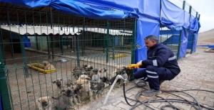 Hayvan barınağı, sokak hayvanlarına sıcak bir yuva oldu