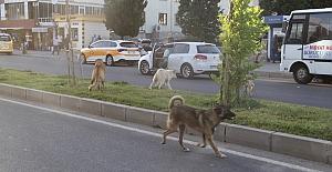 Midyat Belediyesinden sokak hayvanlarına...
