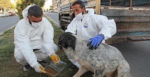 Midyat'ta, sokak hayvanlarına yönelik çalışma