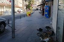 Mardin Büyükşehir Belediyesinden Sokak hayvanlarına 'mama'