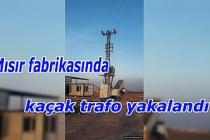 Kızıltepe'de mısır fabrikasında kaçak trafo yakalandı
