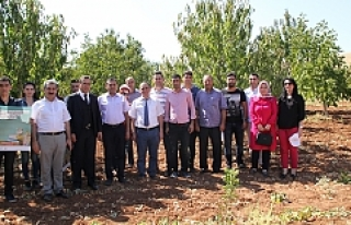 Midyat'ta Organik Bağcılık Eğitimi
