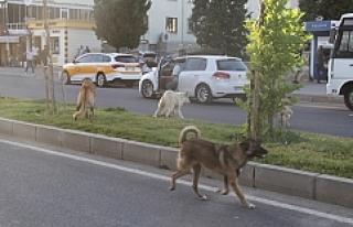 Midyat Belediyesinden sokak hayvanlarına yönelik...