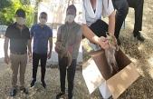 Midyat'ta yolda bulunan yavru tilki, bakıma alındı