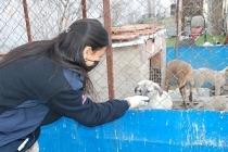 İnfaz Koruma Memurları, sokak hayvanlarını sahiplendiriyor