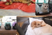 Sokak hayvanları İstanbul'a sevk edildi