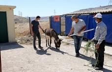 Mardin Büyükşehir Belediyesi yaralı hayvanları tedavileri için İstanbul'a gönderdi