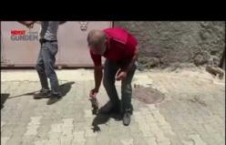 Midyat'ta Kurt saldırısında yaralanan eşek tedavi altına alındı
