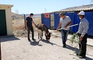 Mardin Büyükşehir Belediyesi yaralı hayvanları...