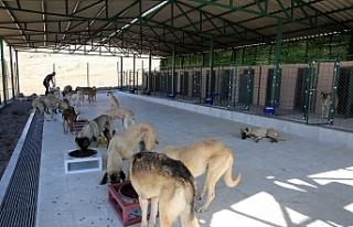 Sokak Hayvanları Rehabilitasyon Merkezinde Çalışmalar...