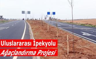 Uluslararası İpekyolu Ağaçlandırma Projesi
